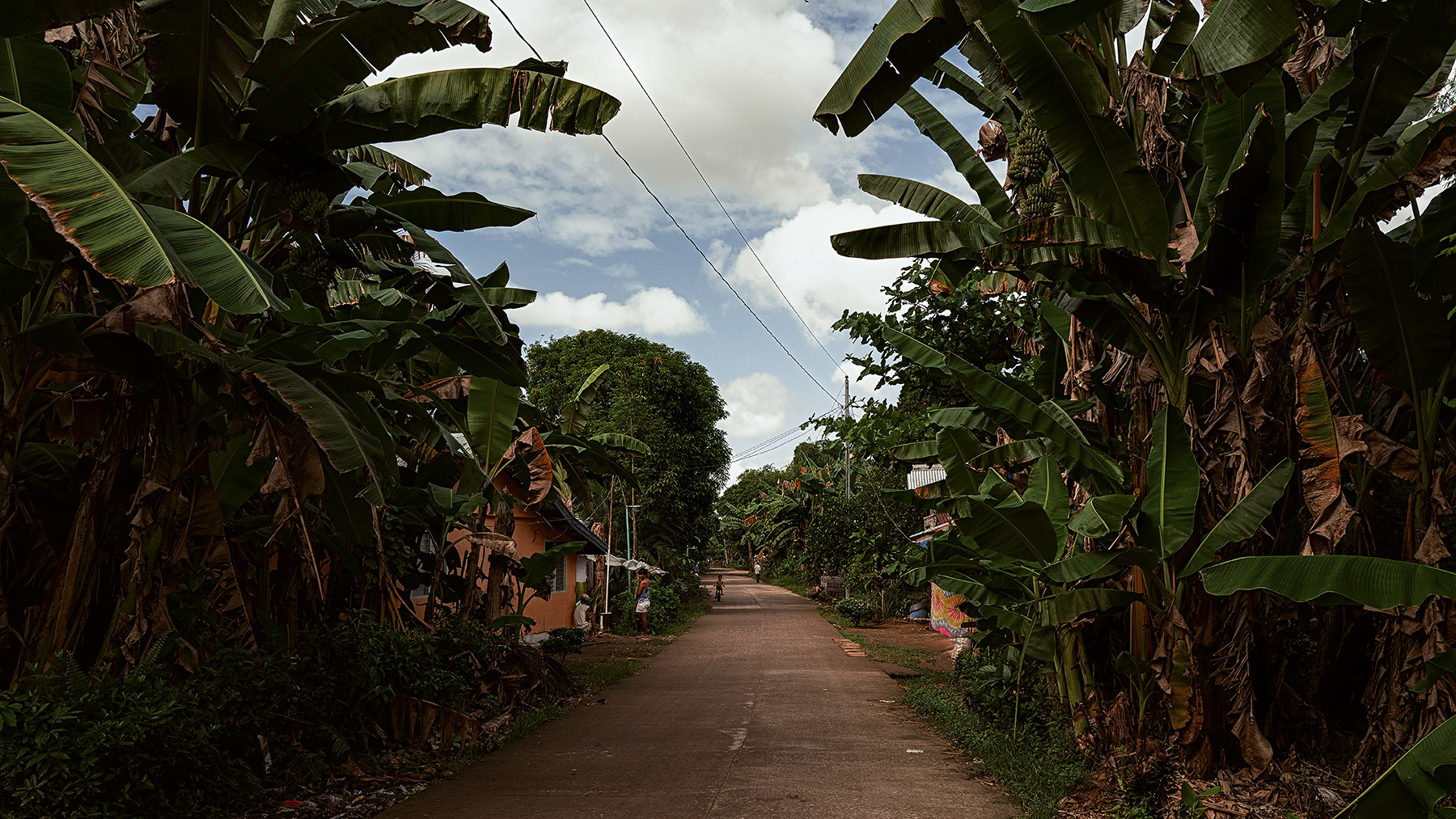 Good Boy Wolf Photographer, filmic landscape, Philippines, tall banana trees